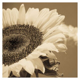 Sepia Sunflower I