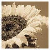 Sepia Sunflower I