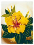Hawaiian Yellow Hibiscus  c1940s