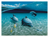 The Chase  Hawaiian Spinner Dolphins