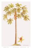 Papaya Tree  Botanical Illustration  18th Century