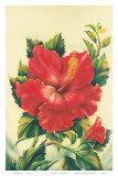 Red Hibiscus  Hawaiian Tropical Flower