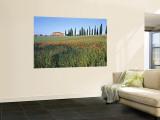 Poppies  Tuscany  Italy