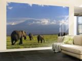 Elephant  Mt Kilimanjaro  Masai Mara National Park  Kenya