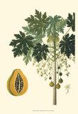 Exotic Palms V