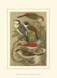 Petite Songbirds II