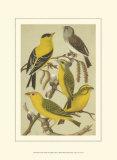 Petite Songbirds III
