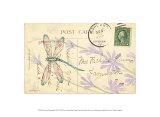 Postcard Dragonfly III
