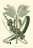 Exotic Palms IV