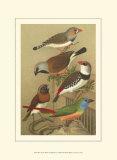 Petite Songbirds I