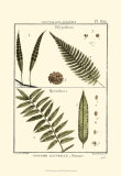 Fern Classification I