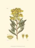 Antique Floral Plate V