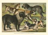 Dog Breeds III