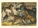 Dog Breeds I