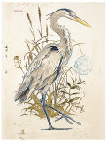 Great Blue Heron (detail)