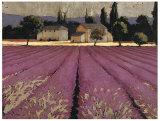 Lavender Weekend