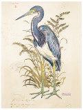 Tricolor Heron (detail)