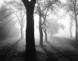 Baume im Nebel I
