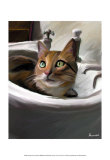 Orange Cat in the Sink