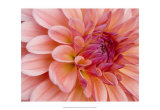 Graphic Dahlia II