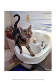 Gray Tiger Cat on the Sink