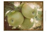 Vintage Apples III