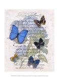 Hydrangea Butterflies I