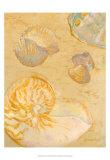 Shoreline Shells VI