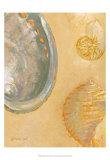 Shoreline Shells V