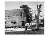 African Americans Preparing Cotton for the Gin on Smith's Plantation  Port Royal Island  SC