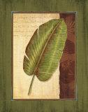 Palm Tropical II