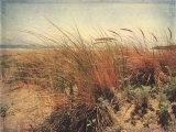 Sand Dunes II