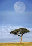Full Moon  Masai Mara  Kenya