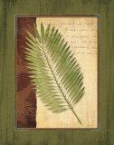 Palm Tropical III