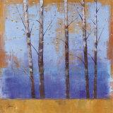 Birch Trees I