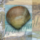 Tranquil Shell