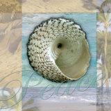 Peace Shell