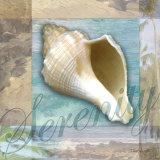Serenity Shell