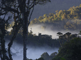Early morning mist hangs in the valleys at sunrise in the rain forest