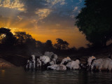 Elephants drink at the last remaining water hole during dry season