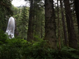 Hemlock  spruce trees and a waterfall on central Chichagof Island