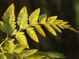 A close view of the detail of a fern