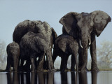 A herd of elephants drink from a water hole in Etosha National Park