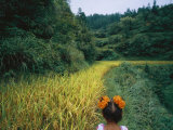 A young girl wanders the rice fields outside a village