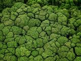 Borneo supports at least 15,000 known species of plants Reproduction d'art par Mattias Klum