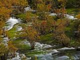 Shuzheng Falls Spilling Past Autumn Colored Bushes