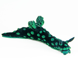 A toxic Nembrotha cristata nudibranch