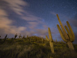 Saguaro cactuses reach toward the stars in an Arizona desert