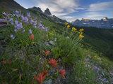 Wildflowers along Garden Wall trail from Logan Pass