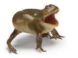 A Budgett's frog